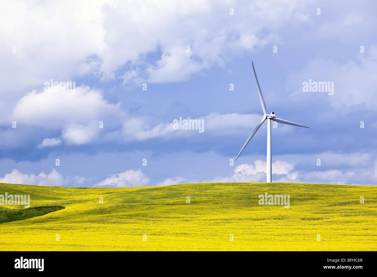 La turbina eólica y campo de Canola, en un día tempestuoso. San León, Manitoba, Canadá. Imagen De Stock