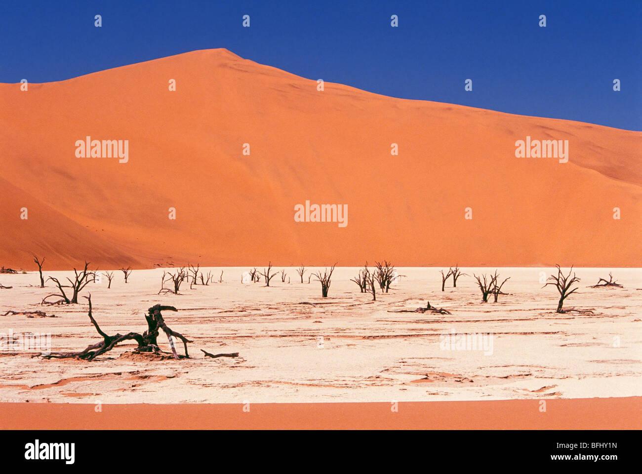 Árbol Muerto de esqueletos y agrietada arcilla rodeado por dunas de arena del Parque Nacional Namib-Naukluft Imagen De Stock