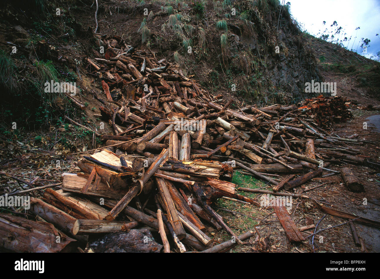 Deforestación destrucción Munnar ; ; ; Kerala India Imagen De Stock