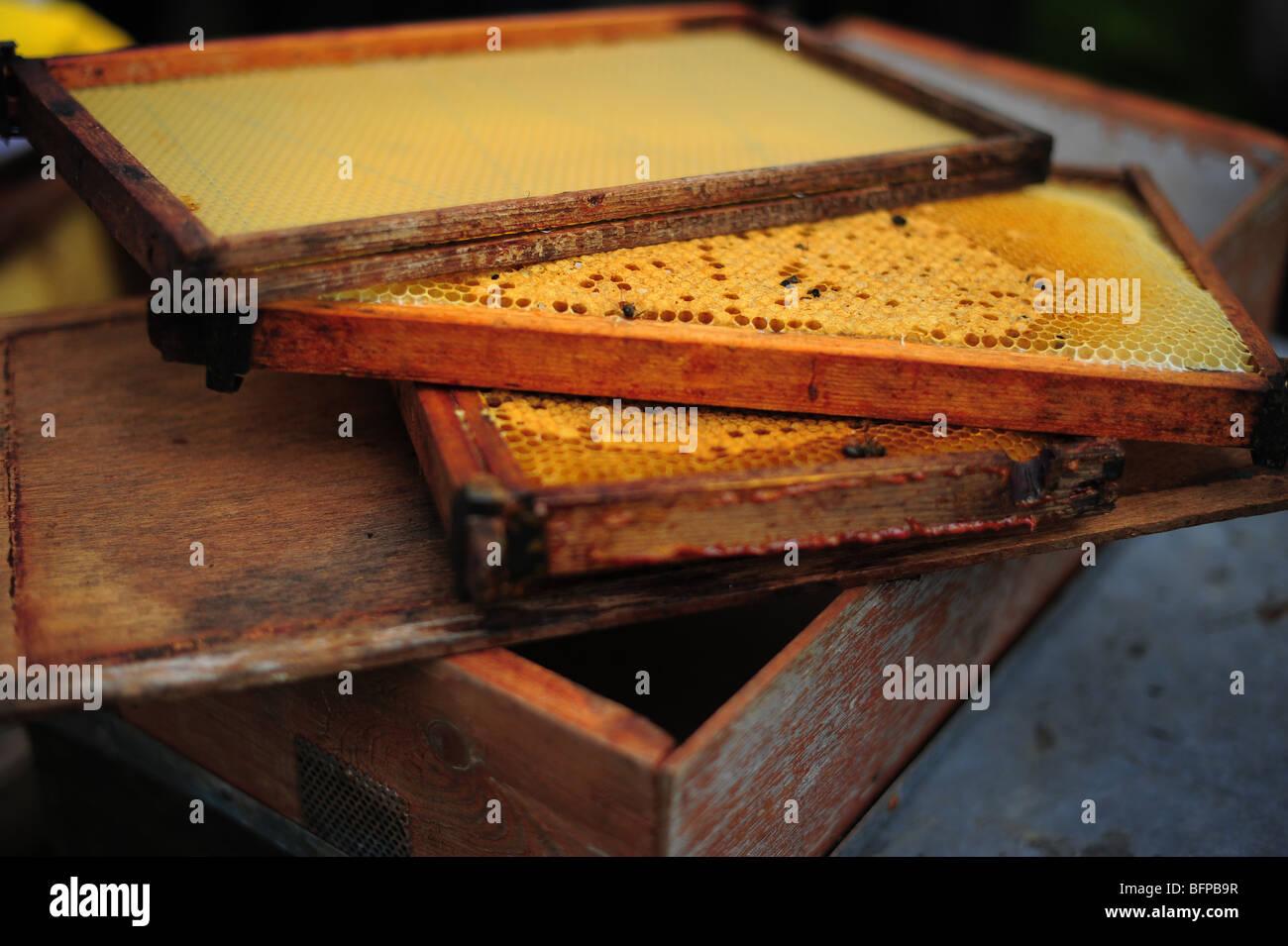 Los marcos de la colmena de abejas de madera cargados con miel Foto ...