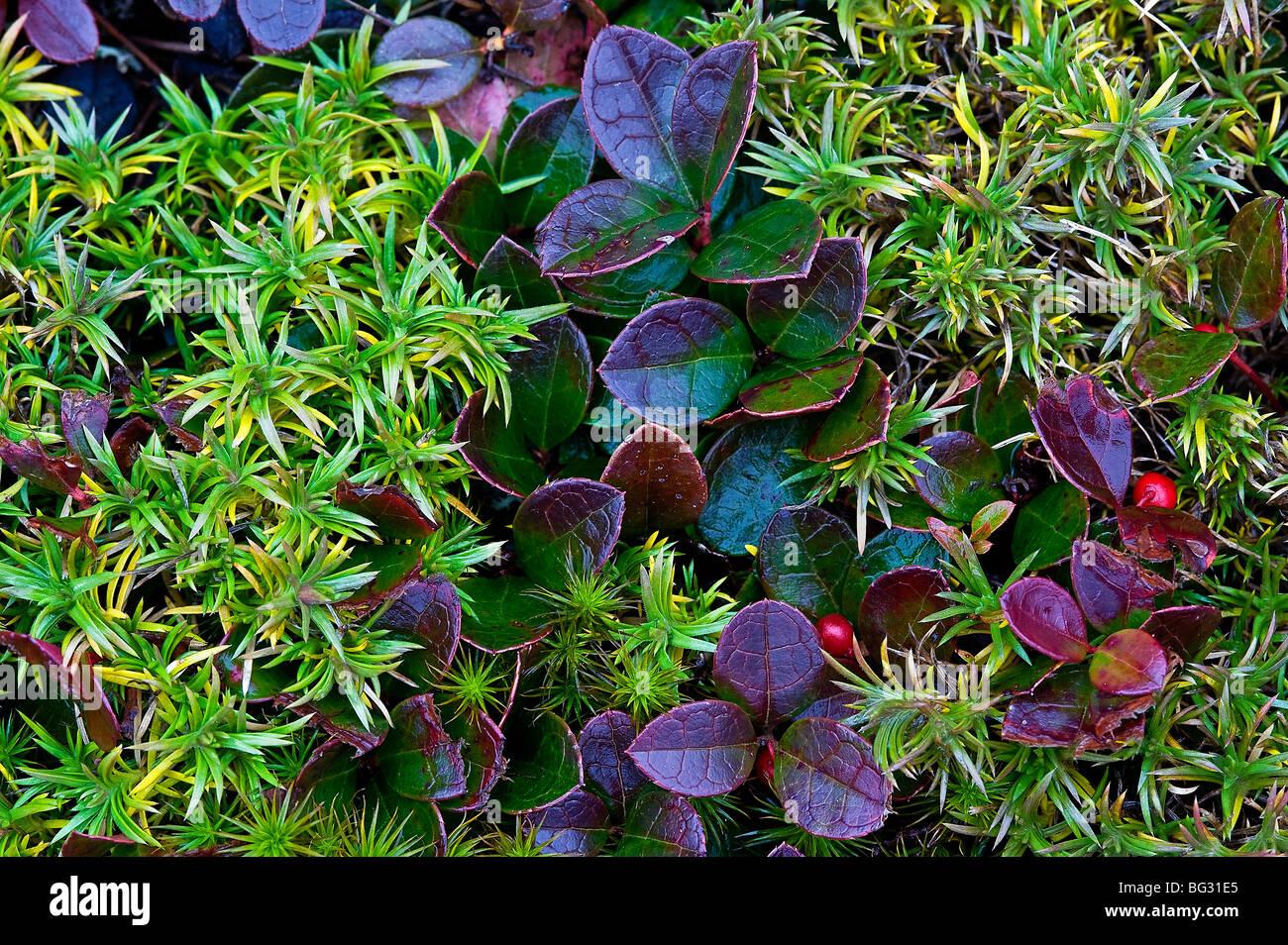 Otoño colorido suelo cubrir las plantas. Imagen De Stock