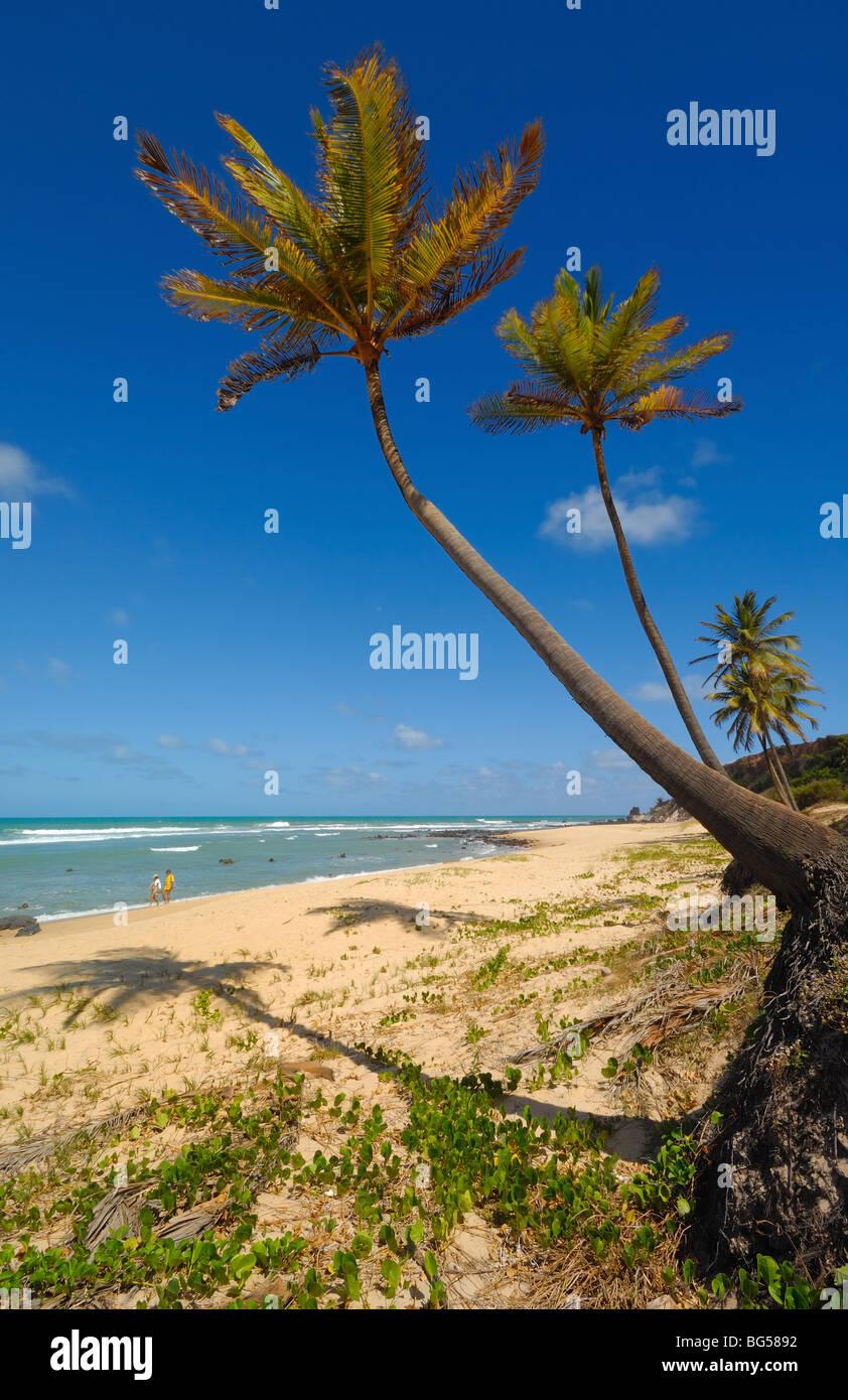 Palmeras y una hermosa playa de Praia do Amor cerca de Pipa Brasil Imagen De Stock