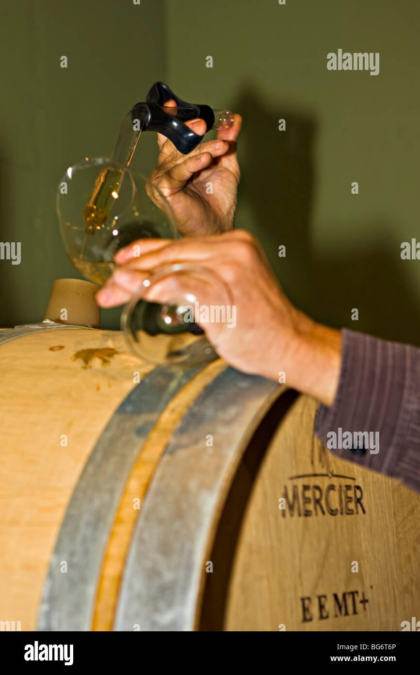 Enólogo demostrando pruebas de un barril de vino en Gewuerztraminer bonita bodega, Summerland, Región Imagen De Stock