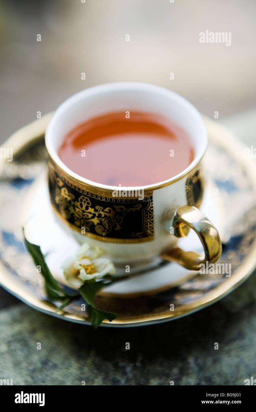 Una taza de té Darjeeling fresco en Darjeeling, India Foto de stock