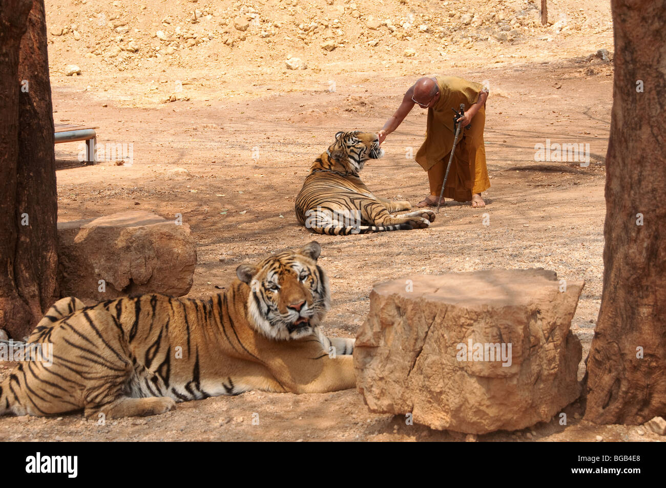 El abad del templo del tigre en Kanchanaburi, Tailandia visitas con su tiger temas Foto de stock