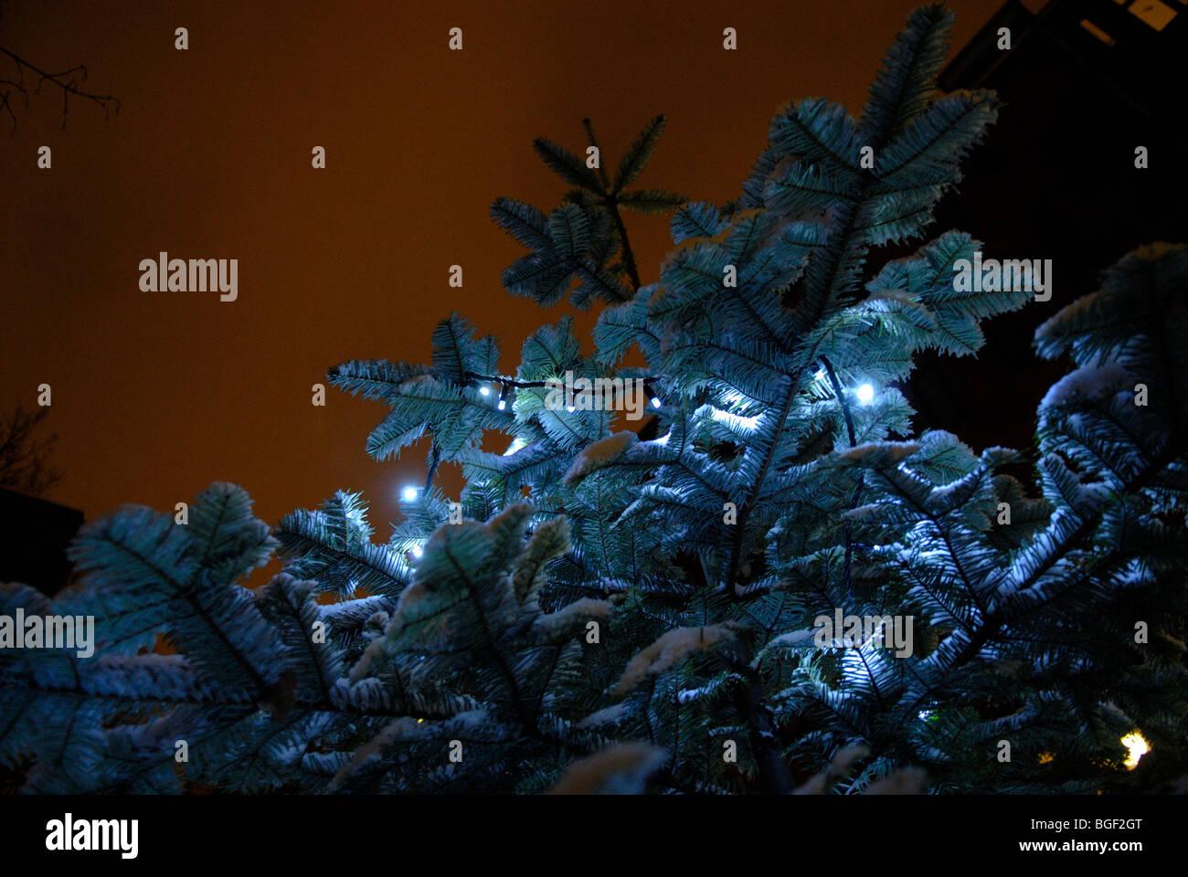 Árbol de Navidad en el exterior Imagen De Stock