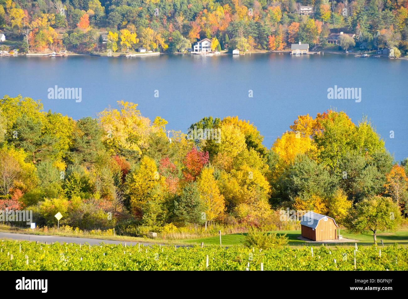 Colores de otoño bodega Viñedos de la región de Finger Lakes de Nueva York Foto de stock