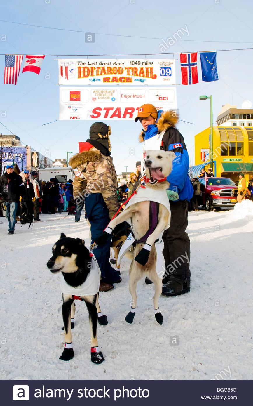Aaron Peck's llevar perro saltar al inicio de la 37ª carrera de trineos de perros Iditarod, 7 de marzo Imagen De Stock