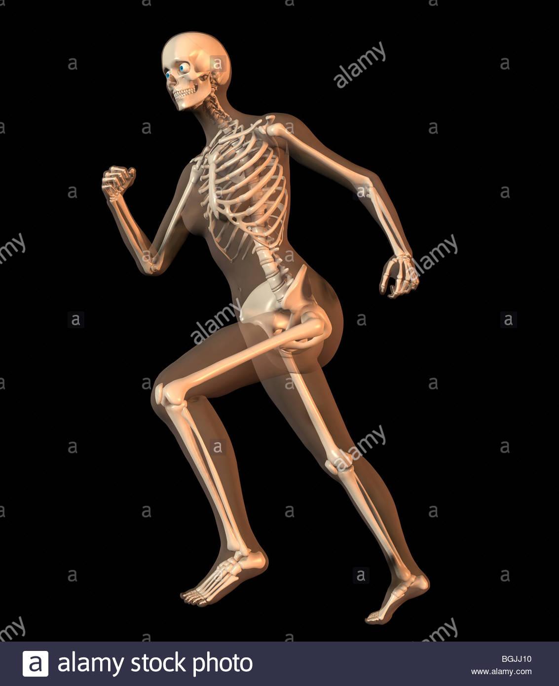 Skeleton Transparent Skin Imágenes De Stock & Skeleton Transparent ...