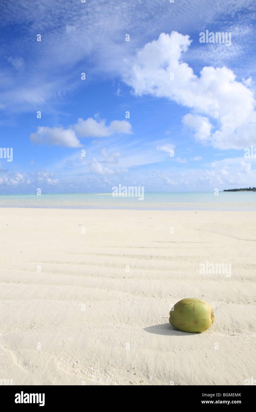 Coco en aguas poco profundas, las Islas Maldivas Foto de stock