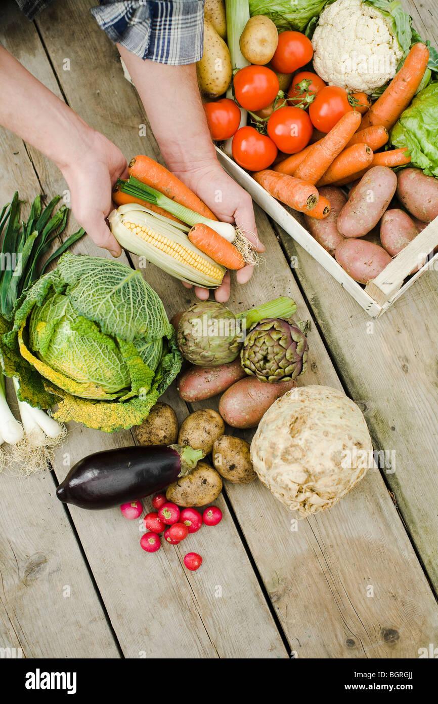 Un montón de diferentes verduras. Imagen De Stock