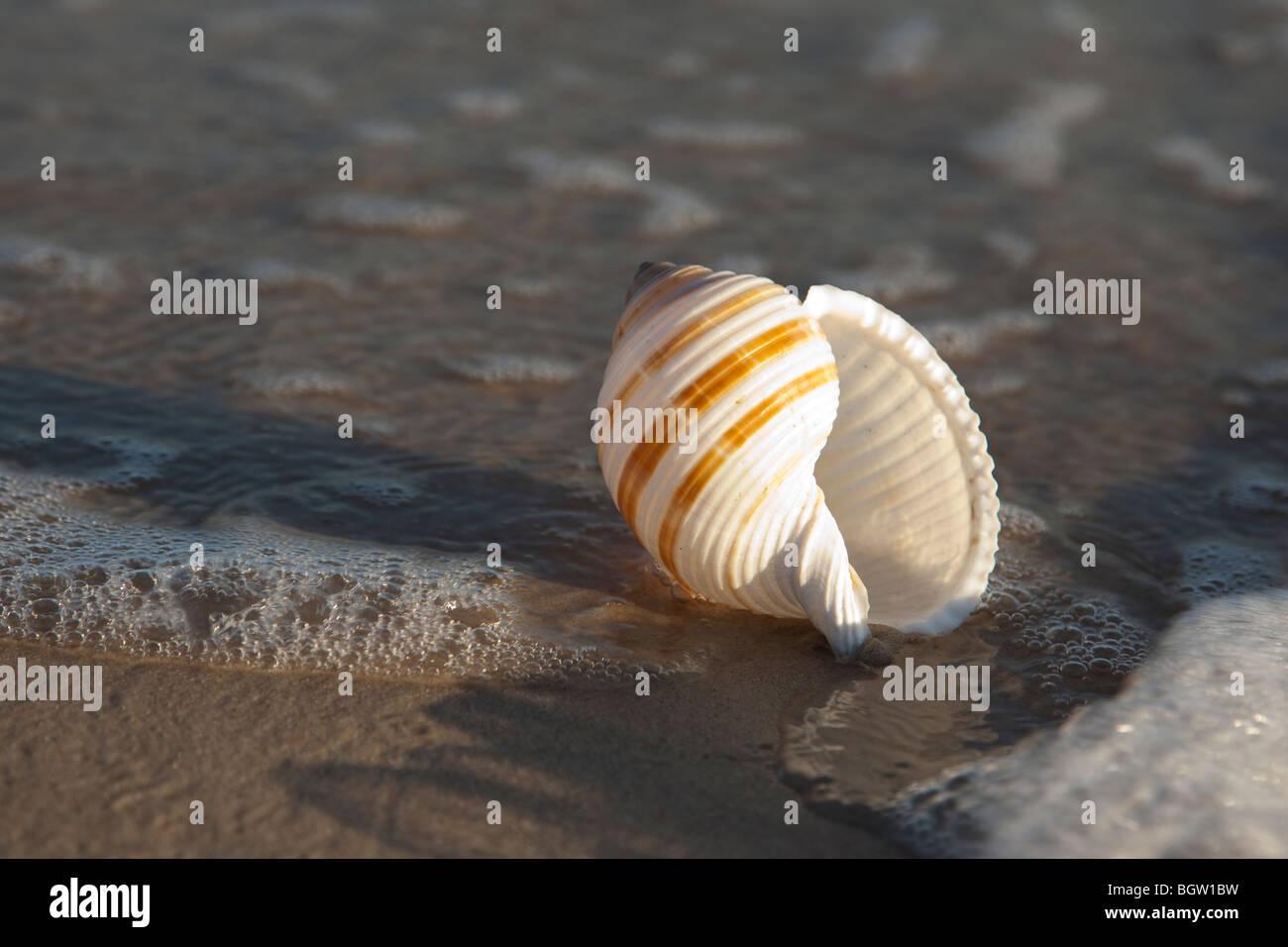Shell en una playa de arena amarilla Imagen De Stock
