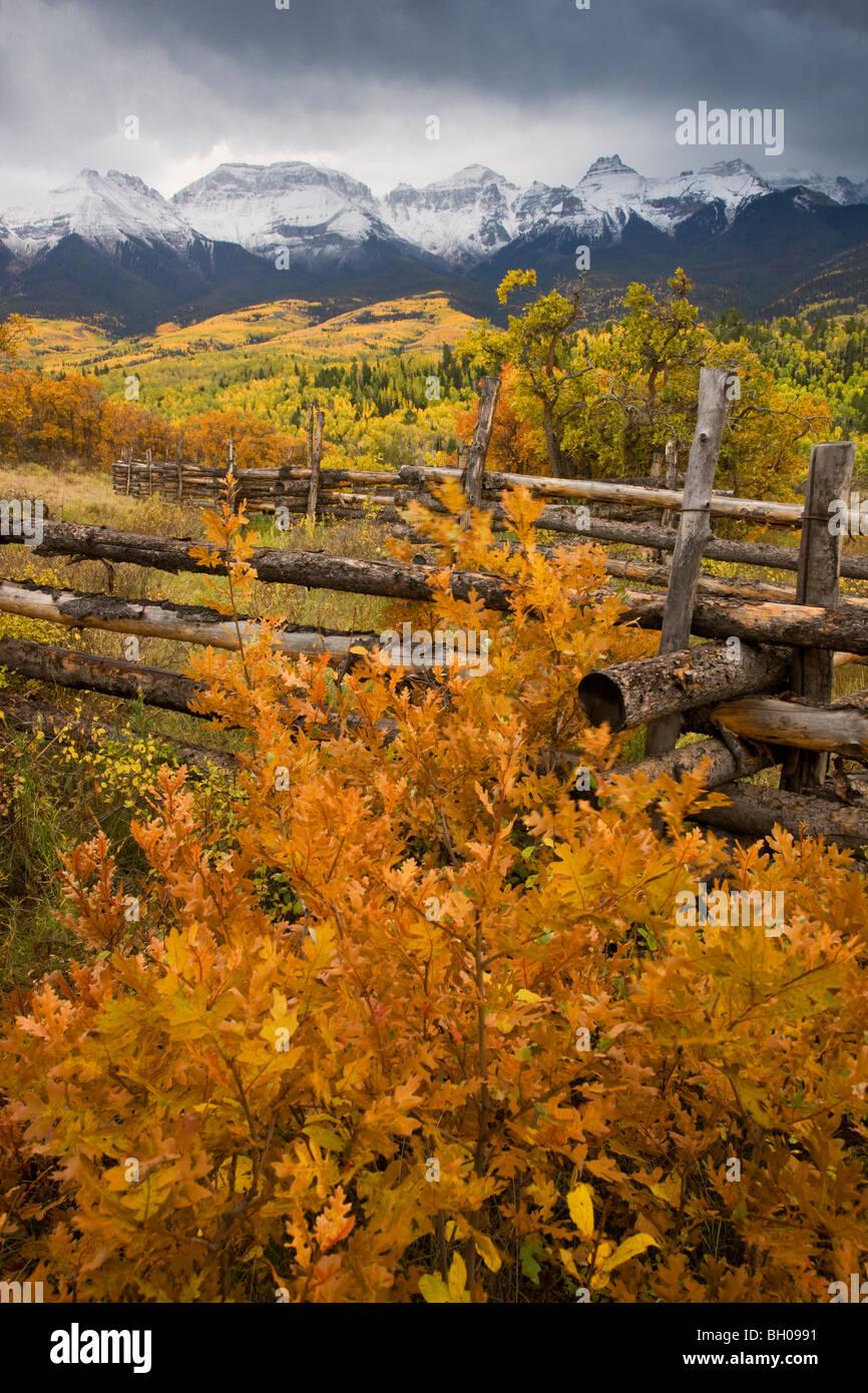 Los colores de otoño y el rango de Sneffels, montañas de San Juan, Colorado. Imagen De Stock