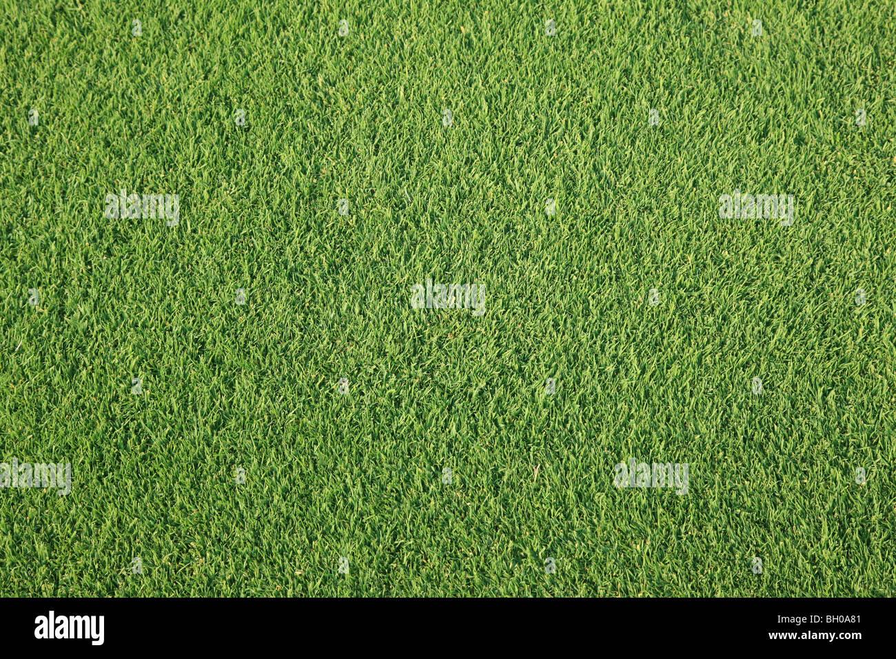 La hierba en campo de golf Imagen De Stock