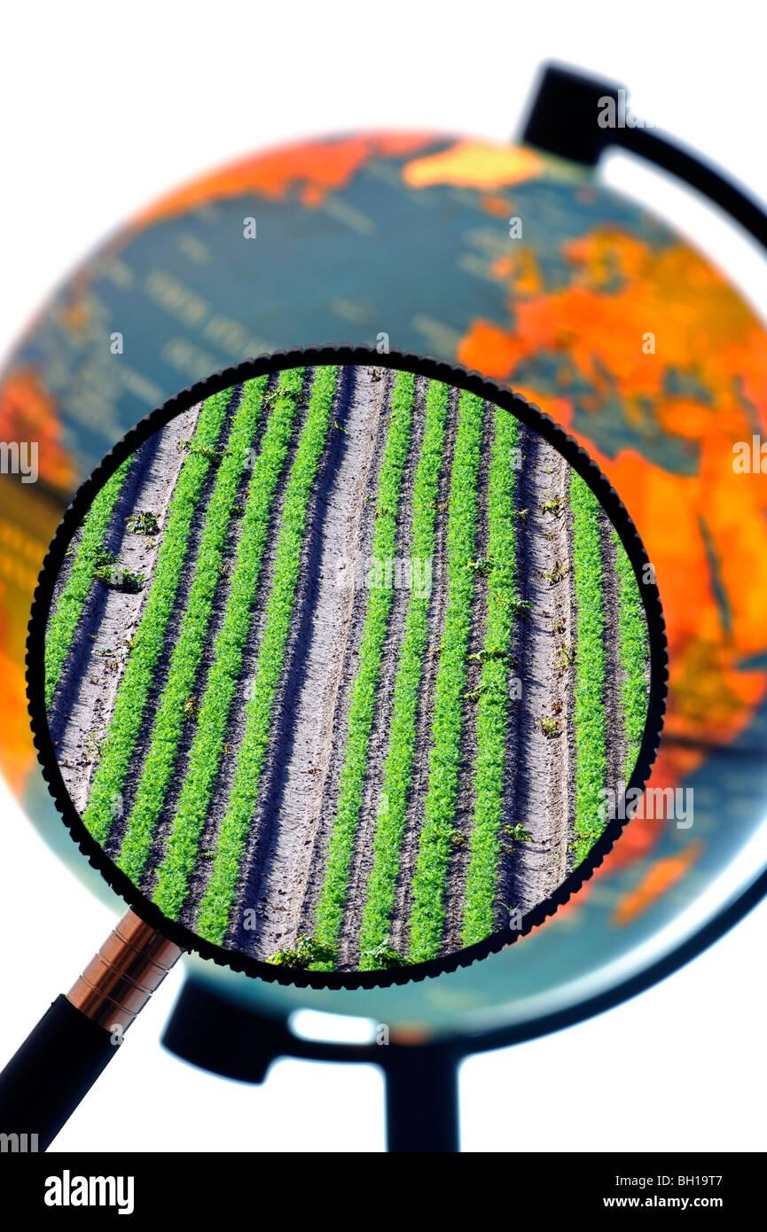 Las filas de cosechas en el campo visible a través de la lupa celebrado contra el globo terrestre iluminada Foto de stock