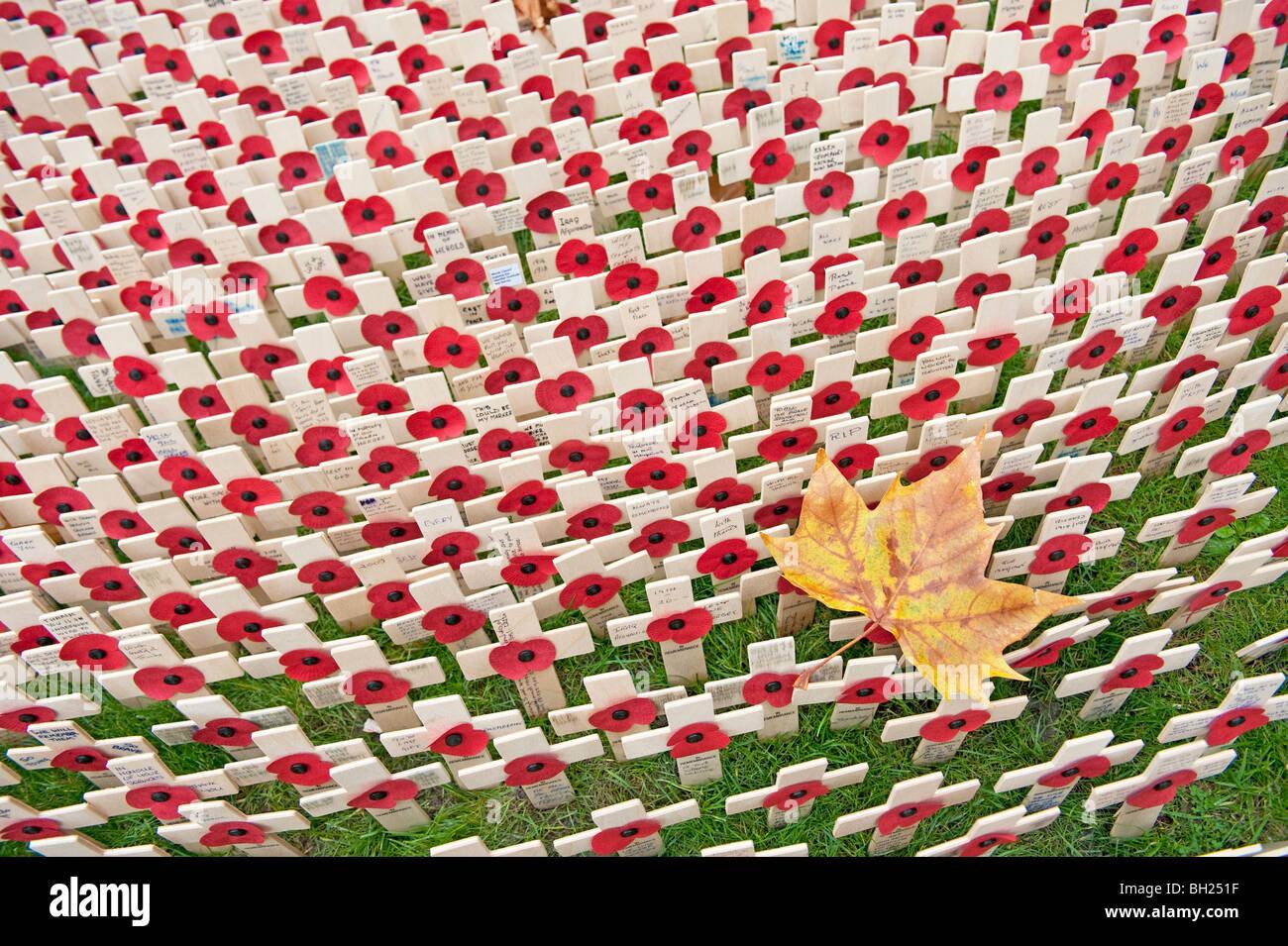 Una hoja de otoño rodeado por pequeñas cruces y amapolas en el campo del recuerdo en la Abadía de Imagen De Stock
