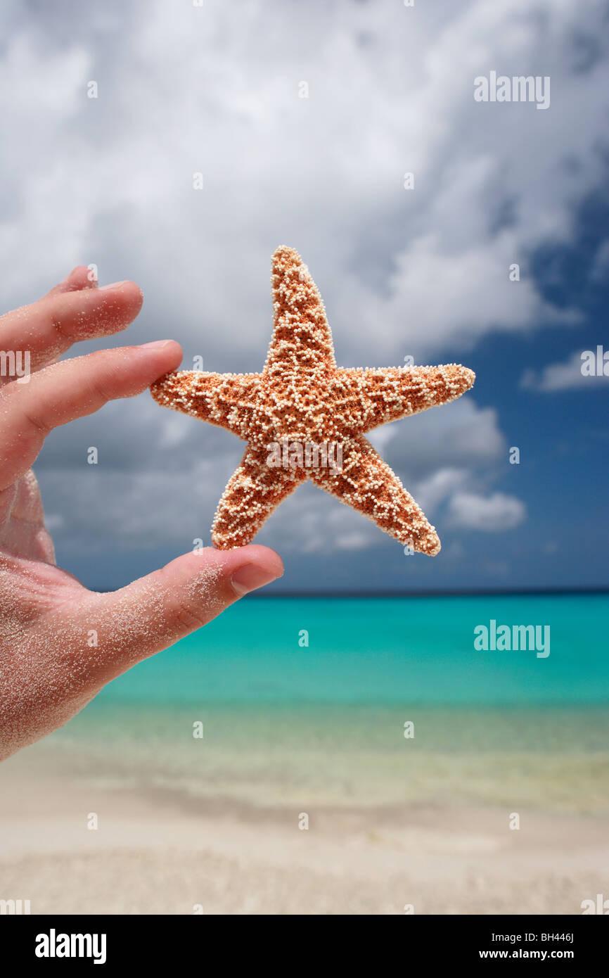 Una mano de hombre sosteniendo una pequeña estrella de mar en el aire en una playa desierta Foto de stock