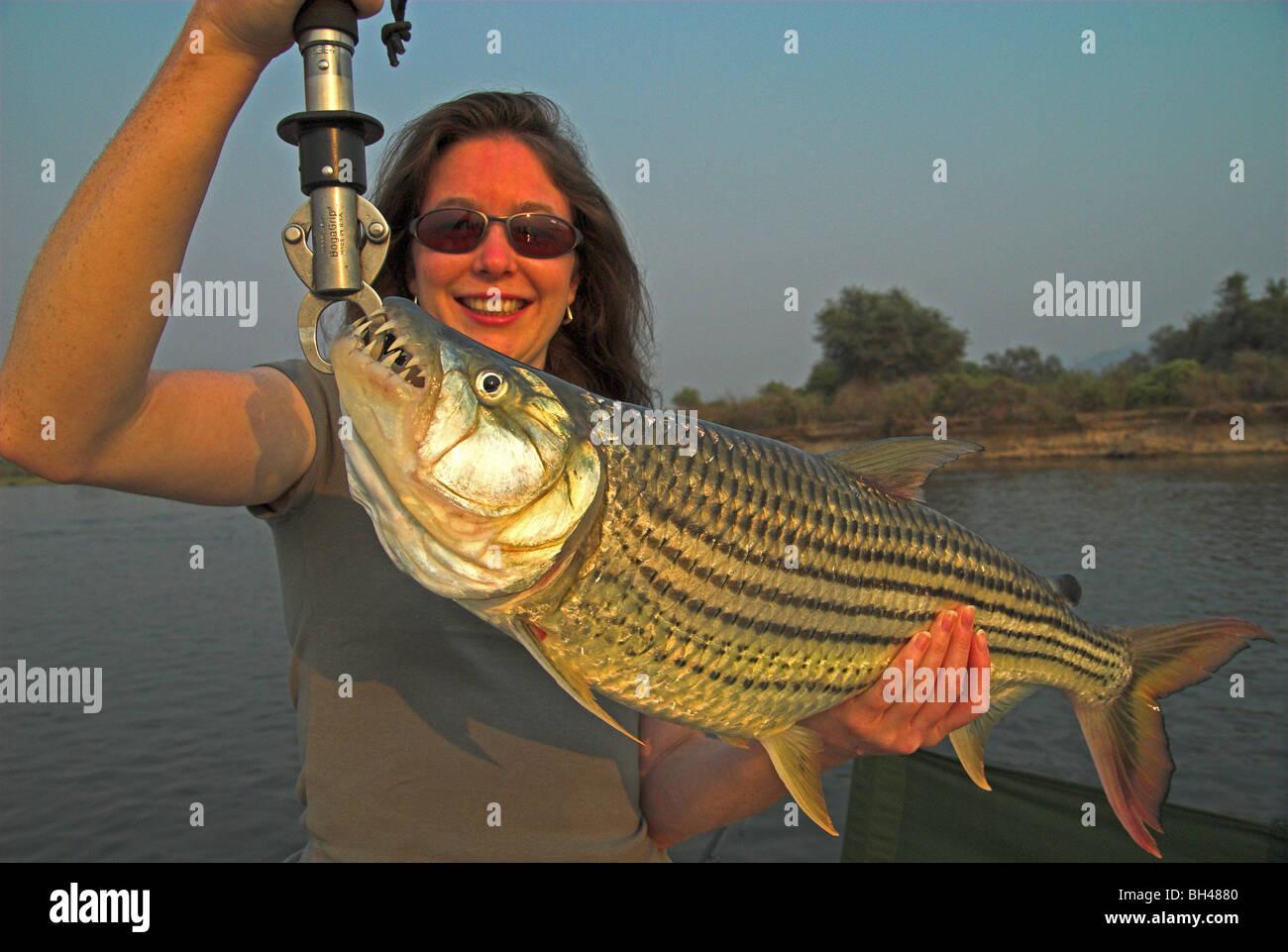Pescador hembra sosteniendo un gran pez tigre (hydrocynus vittatus) capturados en el Bajo Zambezi. Foto de stock