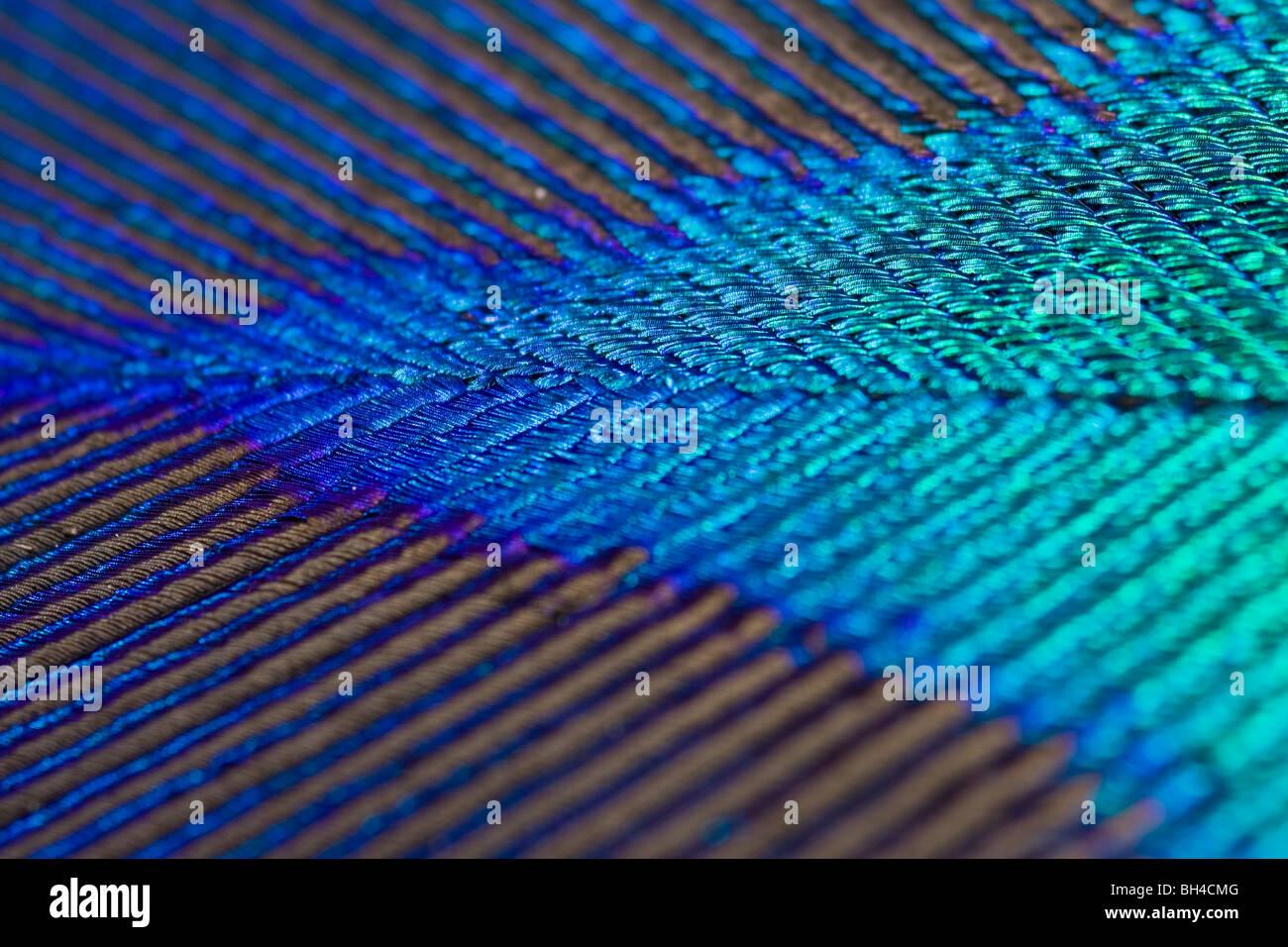 Una macro en forma de V de la composición de un verde-azul iridiscente plumaje de pavo real. Foto de stock