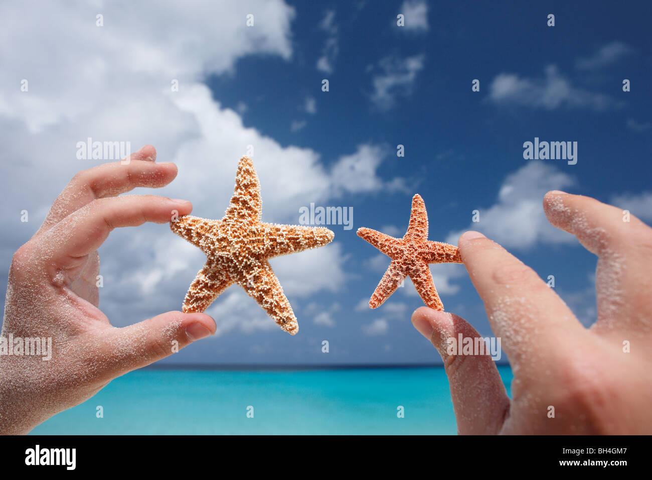 Un hombre de manos sosteniendo una grande y otra pequeña estrella de mar en el aire en una playa tropical Foto de stock