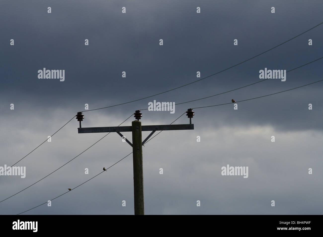 Martins (Delichon urbica casa) sentados en líneas de transmisión de alto voltaje con dramáticas nubes de tormenta. Foto de stock