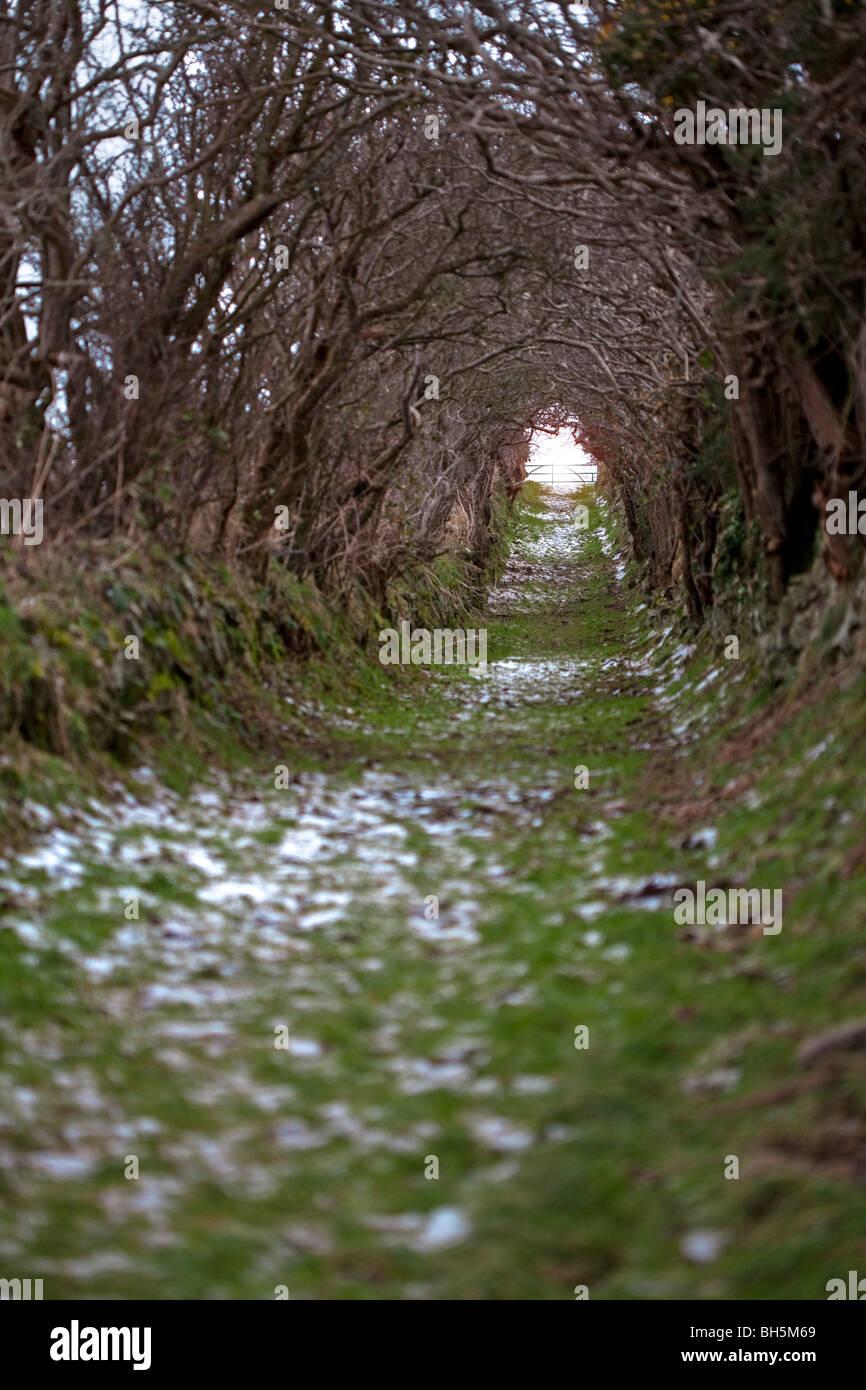 Vía túnel Ballynoe, Downpatrick. Foto de stock
