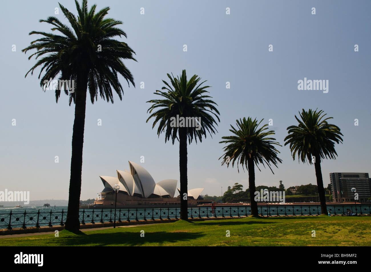 Sydney Opera House, enmarcadas por las siluetas de palmeras en Dawes ...