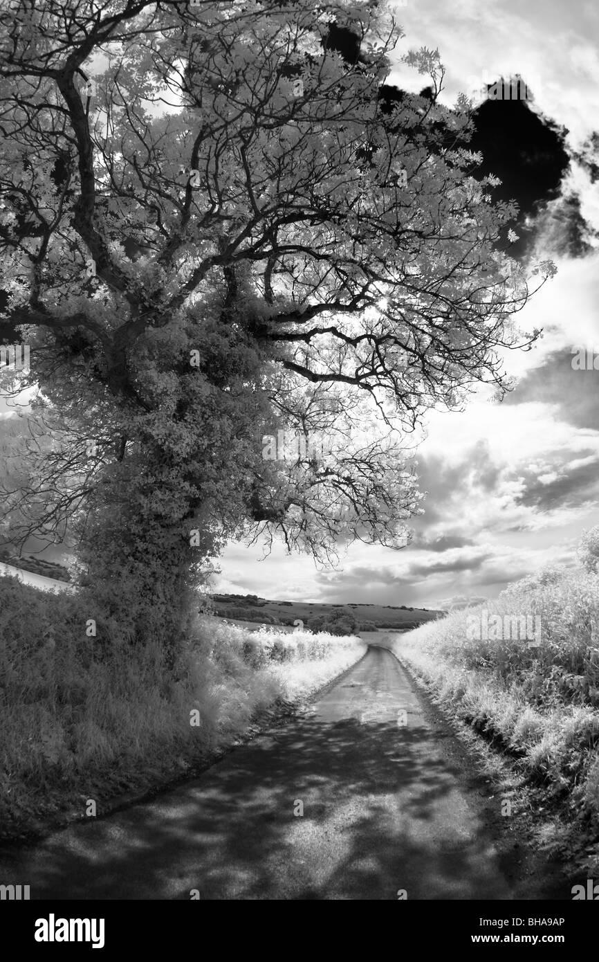 Un país lane, nr de Cerne, Dorset, Inglaterra, Reino Unido. Imagen De Stock