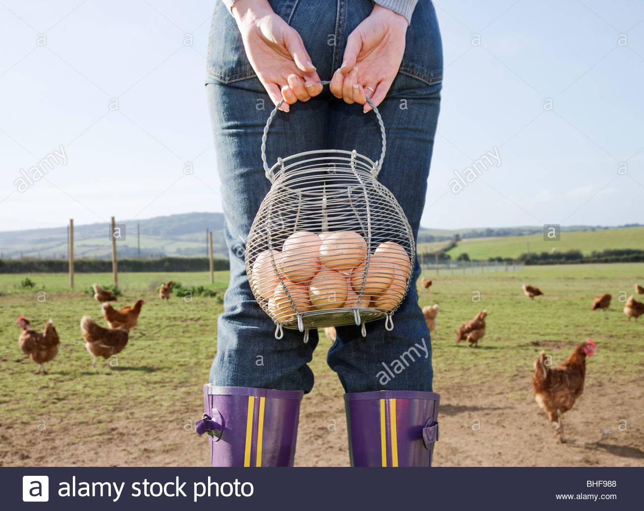 Los agricultores titulares de cesta de huevos cerca de los pollos Imagen De Stock
