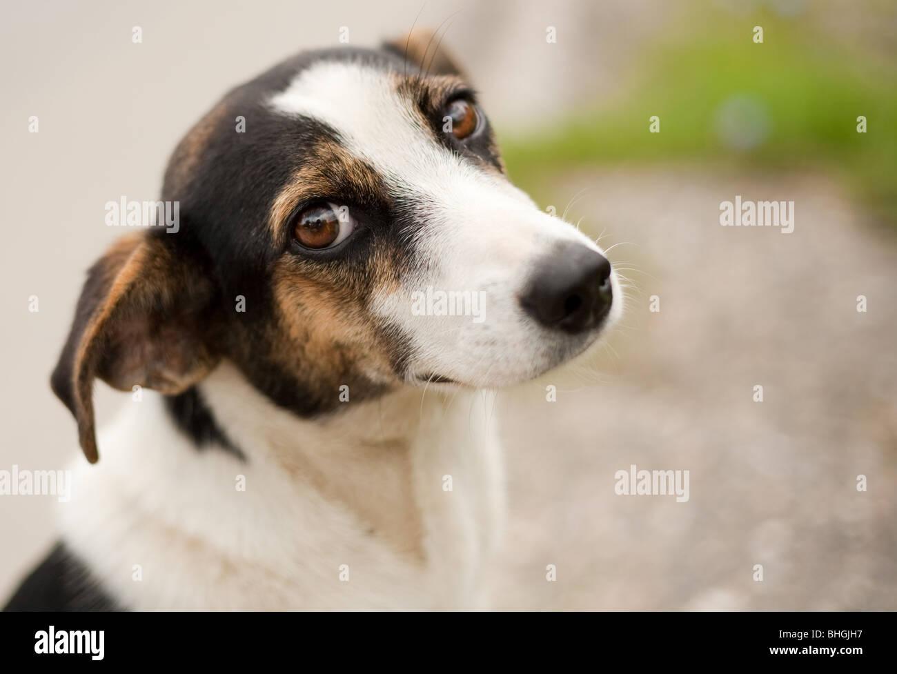 Retrato de un adorable pequeño perro piscina Imagen De Stock