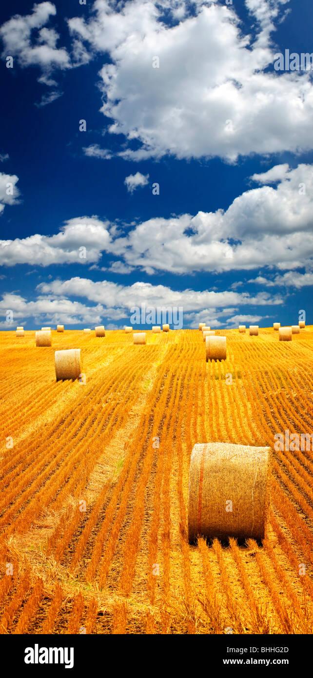 El paisaje agrícola de balas de heno en un campo de oro Imagen De Stock