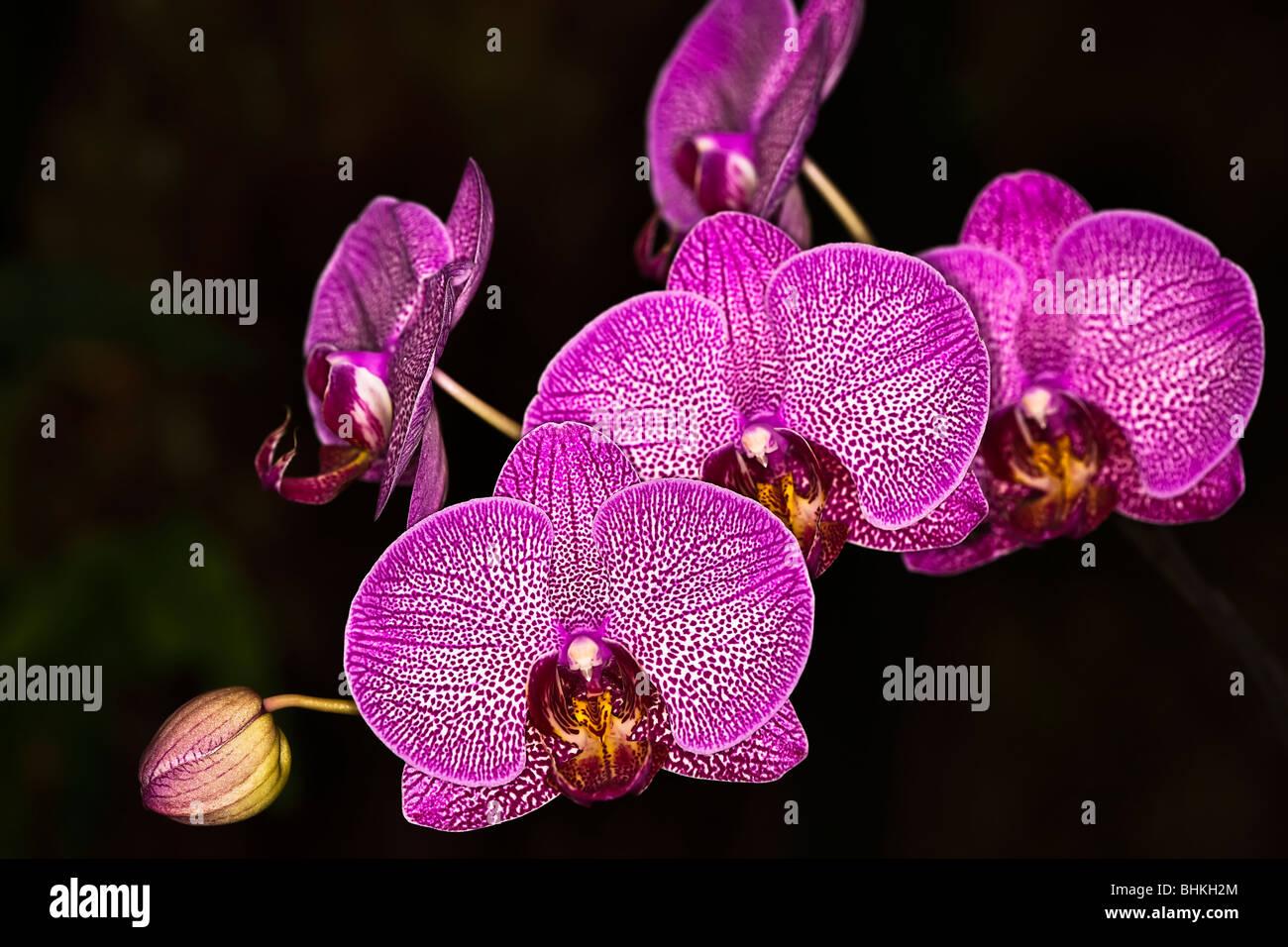 Orquídeas - cerrar Imagen De Stock