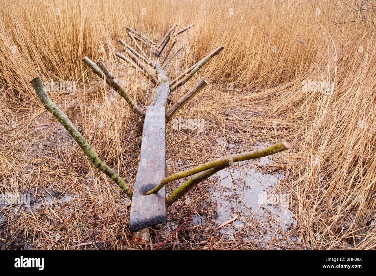 Reconstrucción de la pista dulce (un hombre hecho Neolítico camino o ruta a través de los humedales) Shapwick Heath, niveles de Somerset, Reino Unido Foto de stock