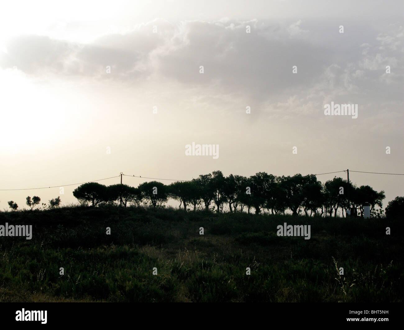 Una línea de árboles en el horizonte Imagen De Stock