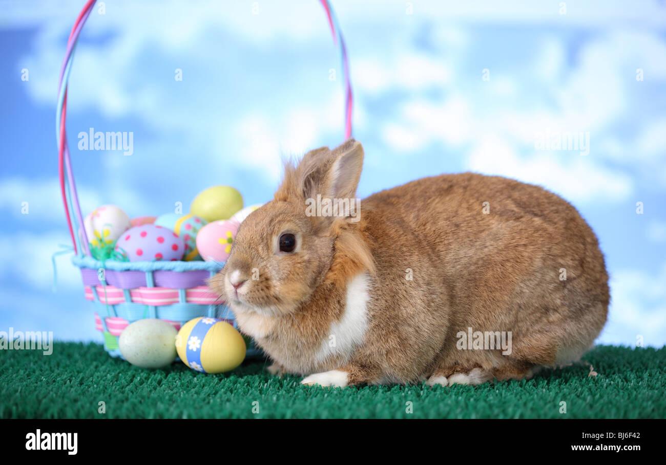 Conejito y canasta de Pascua Foto de stock