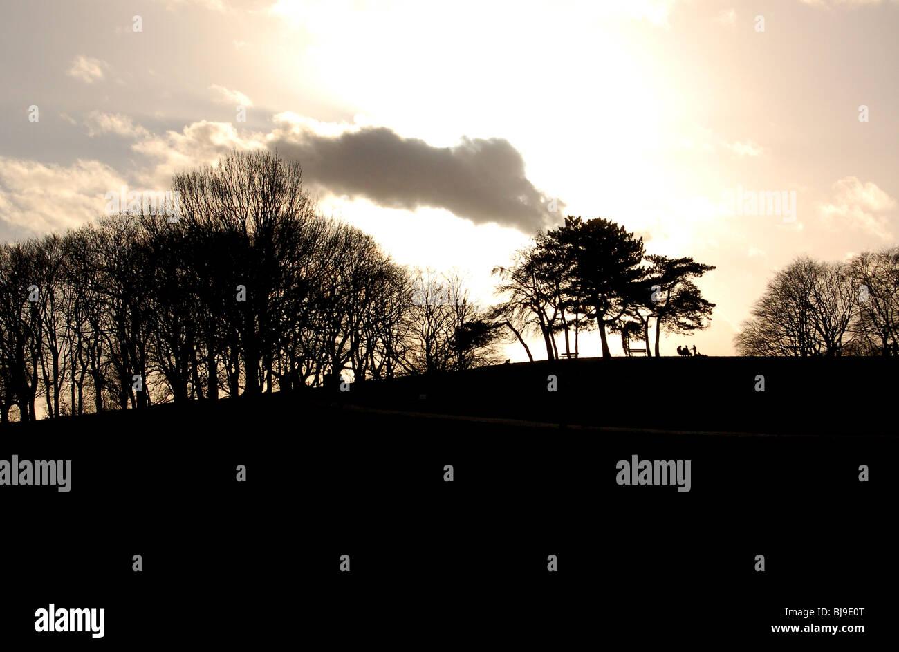 Los árboles descritos en contra de atardecer en Hampstead Heath, Londres Imagen De Stock