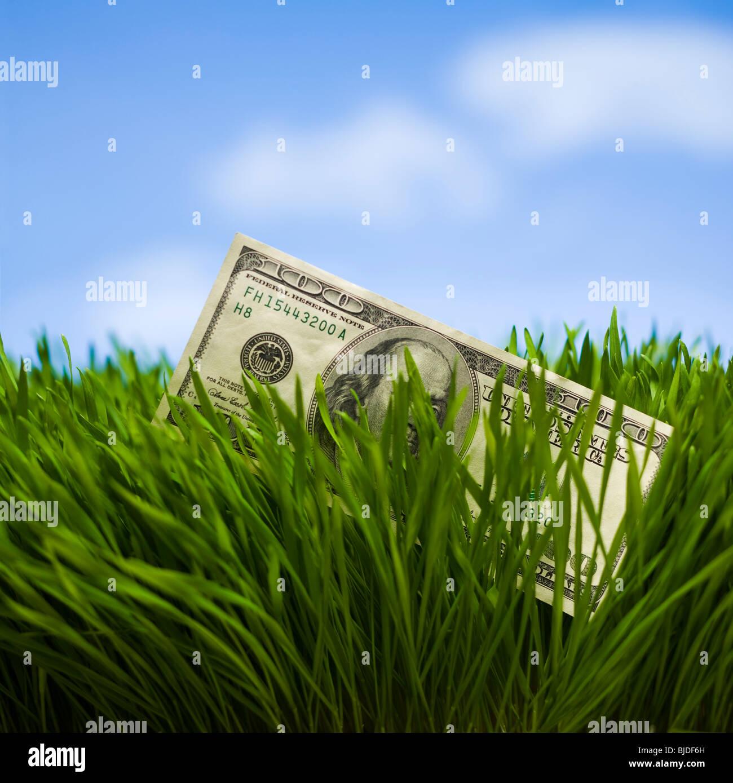 100 billete de dólar en el césped. Imagen De Stock
