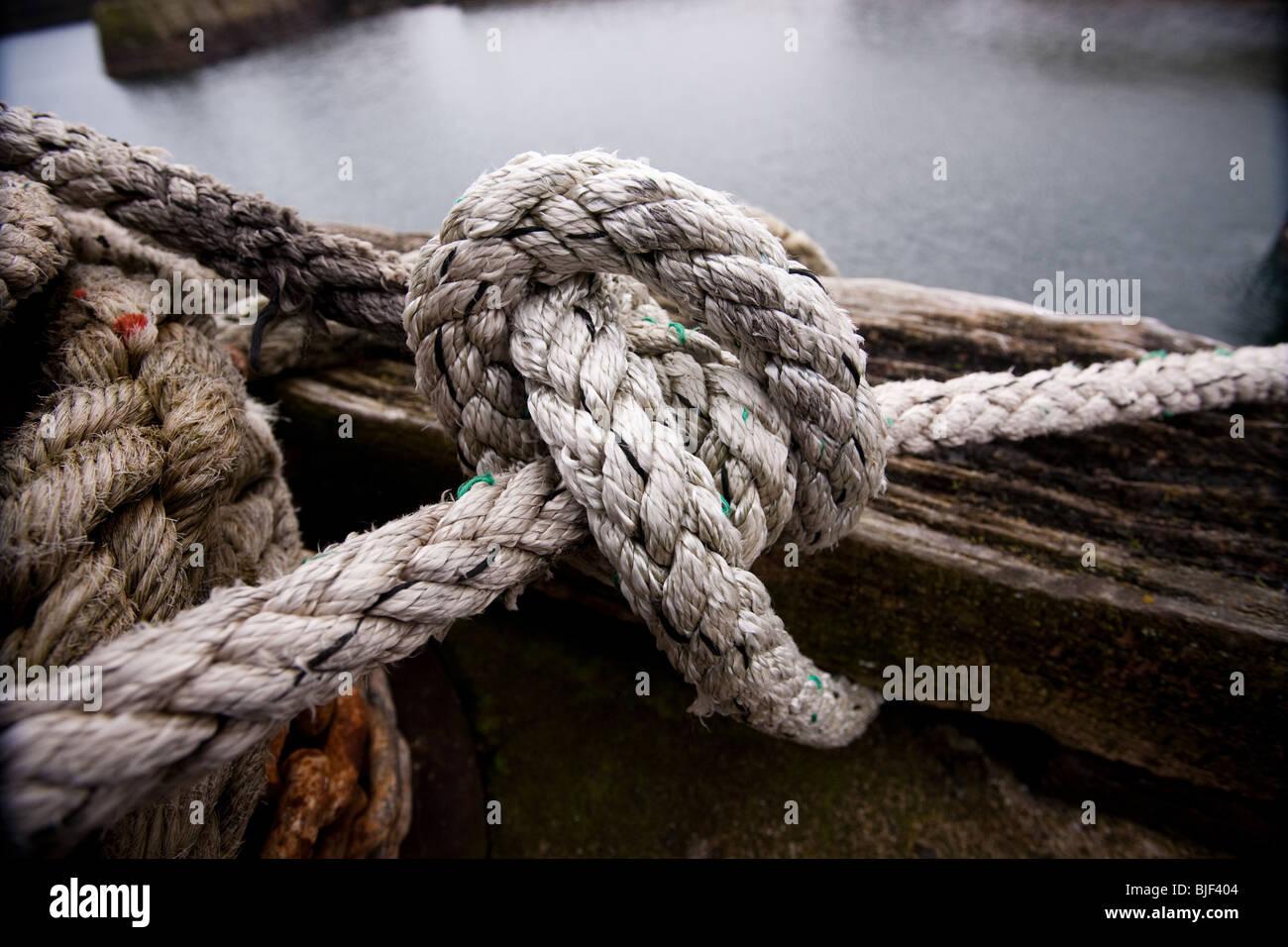 El Knott y cuerda, St Abbs, Eyemouth, Berwickshire, Inglaterra Imagen De Stock