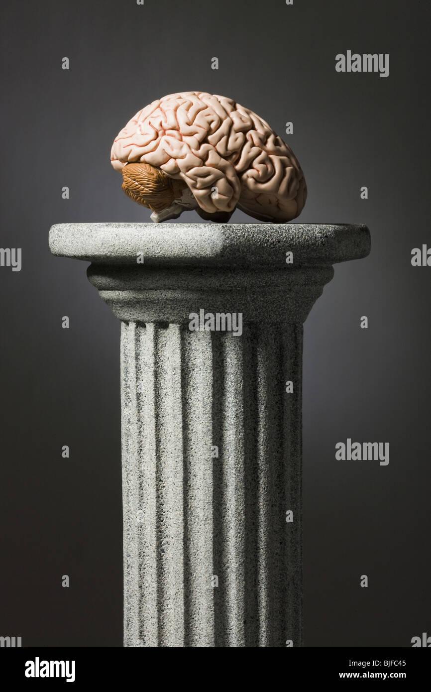 Cerebro en un pedestal Imagen De Stock