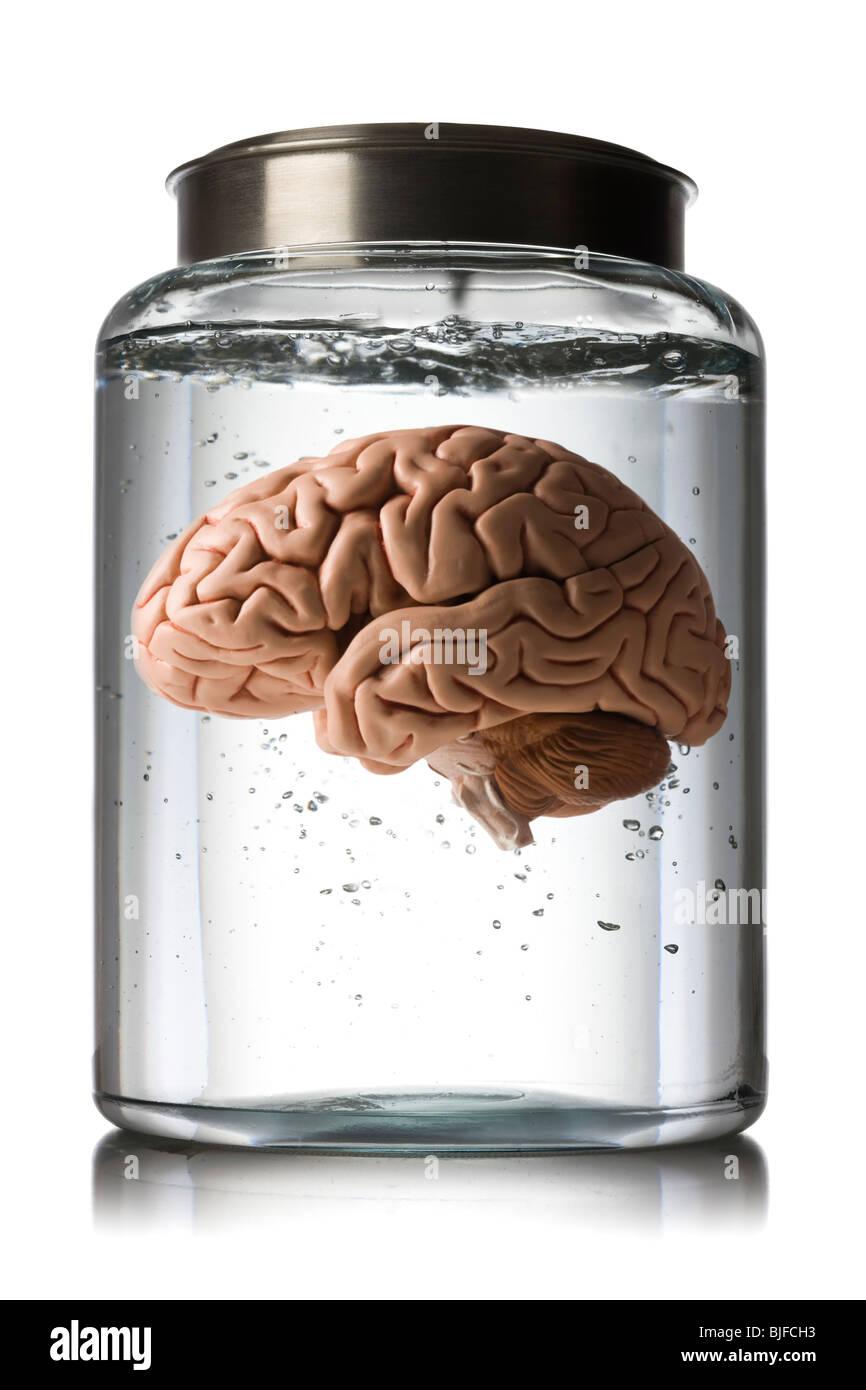 cerebro en un tarro Imagen De Stock