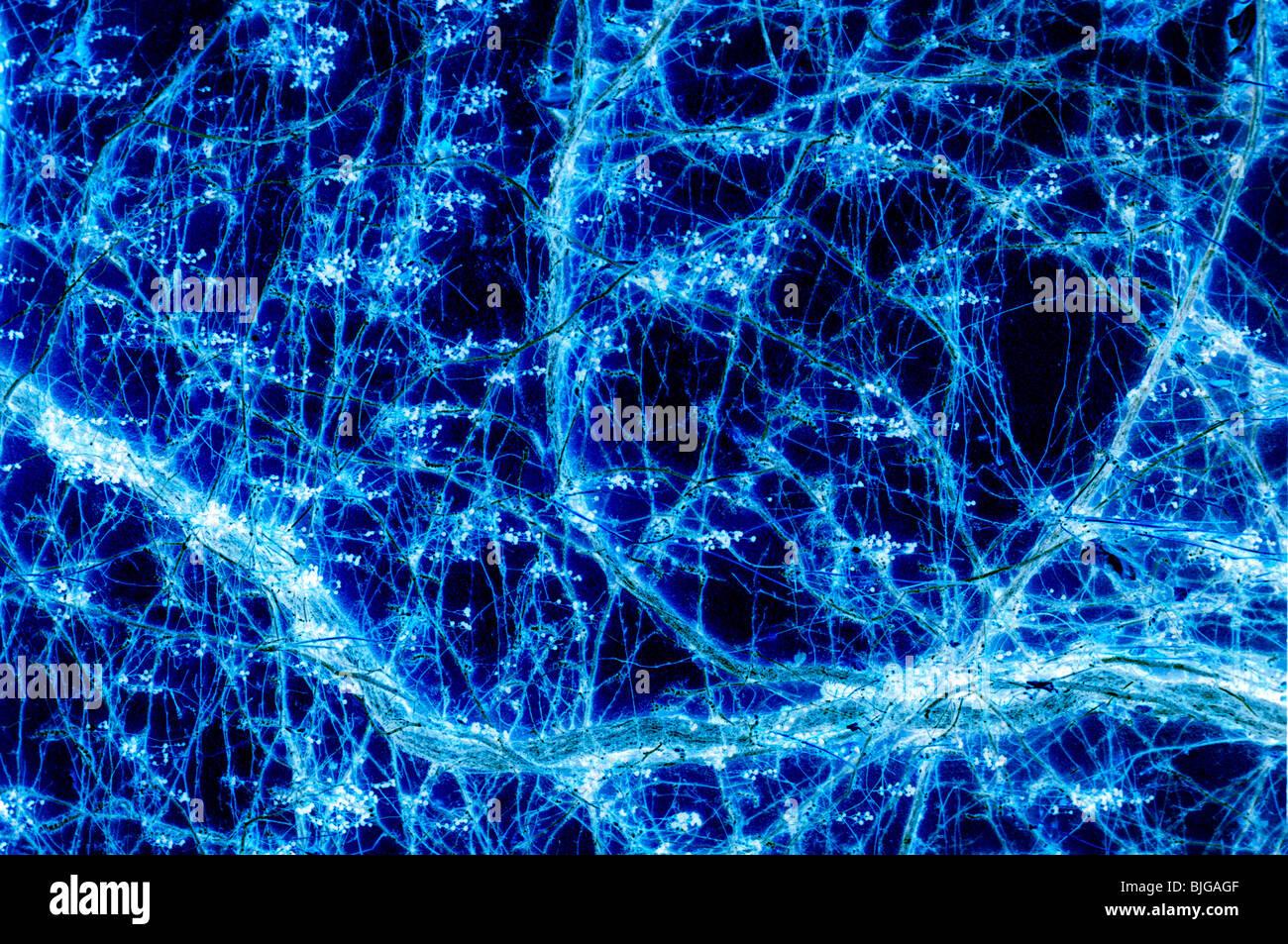 Abstracto que parece un poco como las conexiones entre neuronas (en realidad una transformación negativa de Imagen De Stock