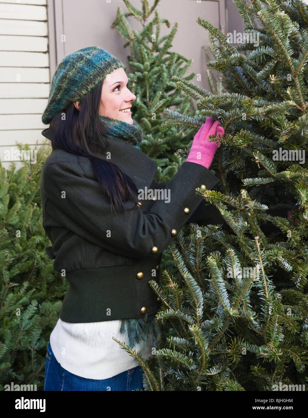 Elegir un árbol de Navidad Imagen De Stock