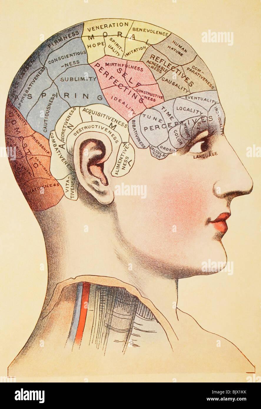 Un phrenological Mapa del cerebro humano. Imagen De Stock
