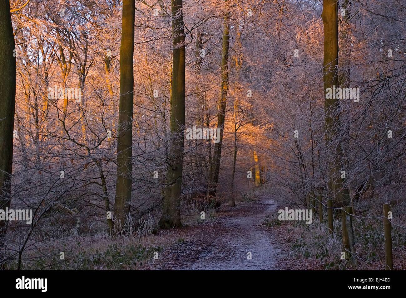 El frío del invierno gélido Chilterns frost caminar camino woods Buckinghamshire Foto de stock