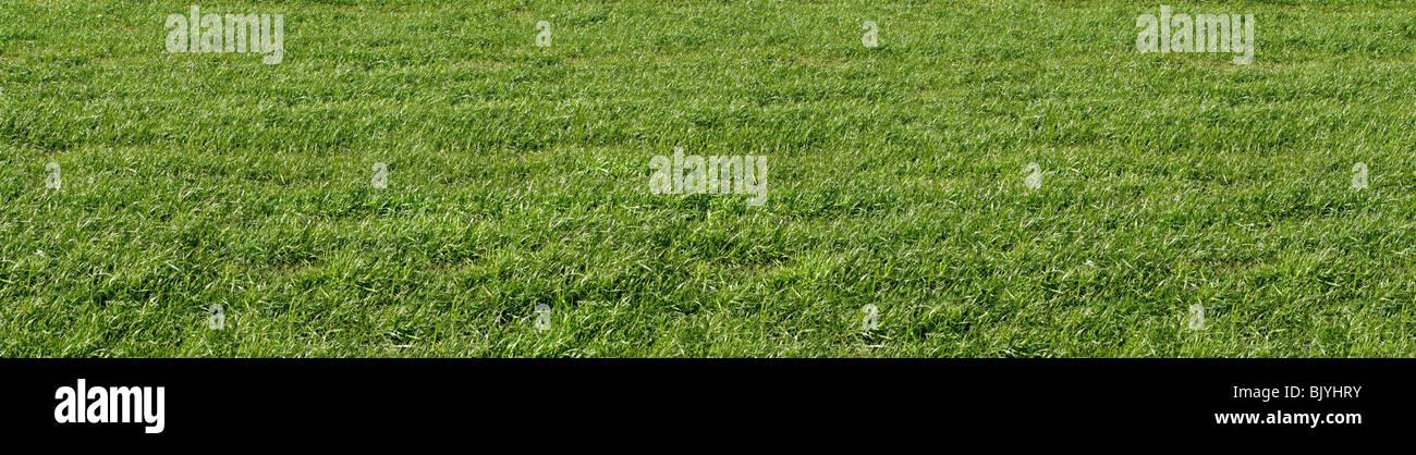 Un campo de hierba normal cerrar Imagen De Stock