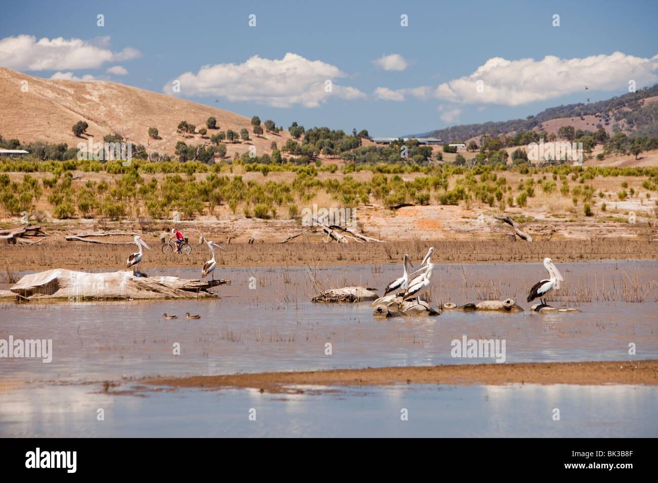 La sequía en el lago Eildon, Bonnie Doon, Australia. Imagen De Stock