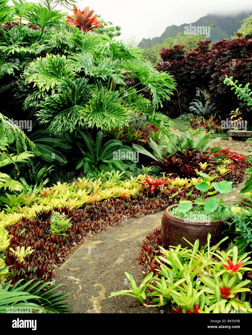 Leland Miyanoi Jardín en Oahu, Hawaii, Estados Unidos de América, el Pacífico Imagen De Stock