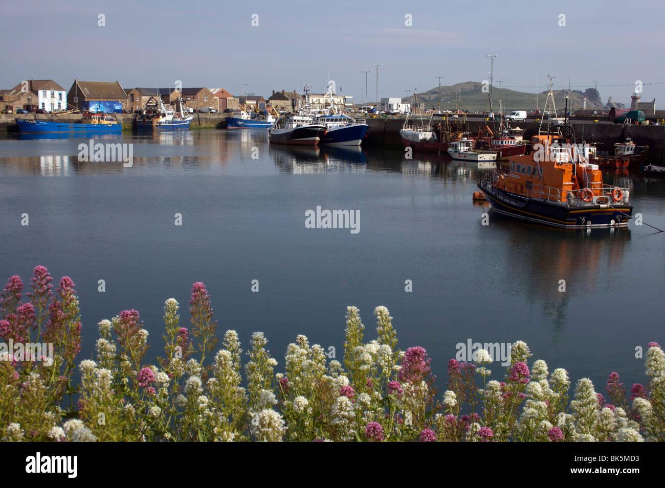Howth Harbor, Condado de Dublín, República de Irlanda, Europa Foto de stock