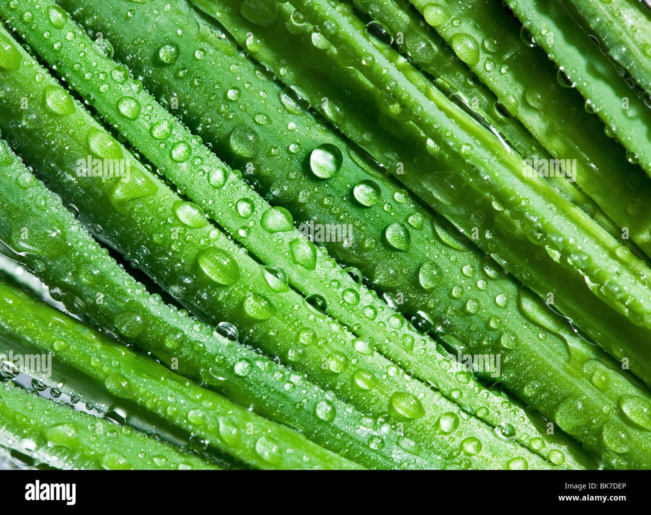 Hojas de cebolla closeup con gotas de agua Imagen De Stock