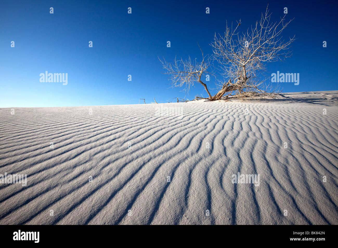 Silencio, Monumento Nacional White Sands, Nuevo México Imagen De Stock